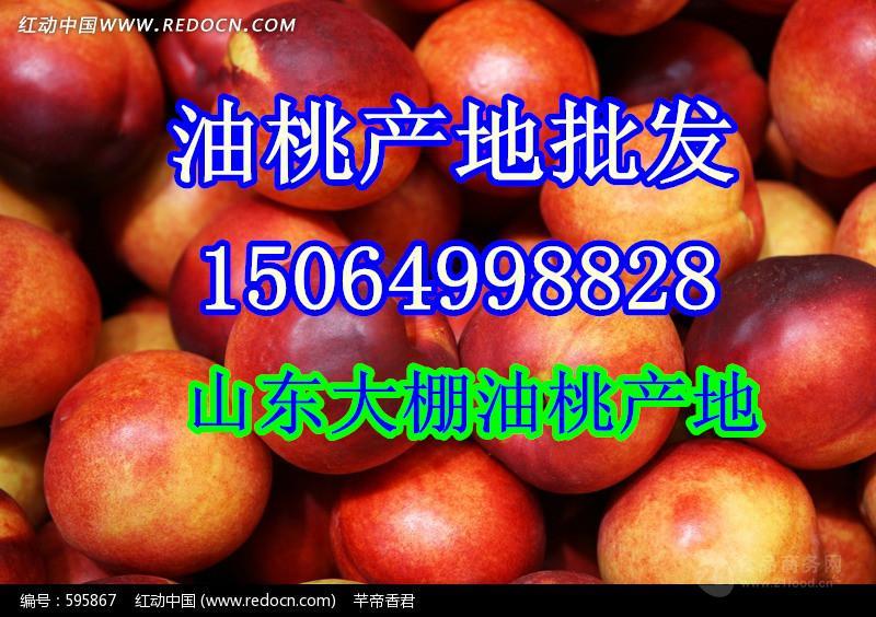 现在的大棚油桃批发价格 山东大棚油桃什么价格 山东油桃产地价格