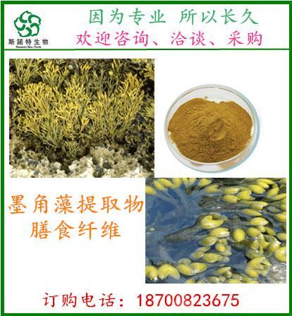 裙带菜提取物   岩藻黄质 5~50%   斯诺特厂家