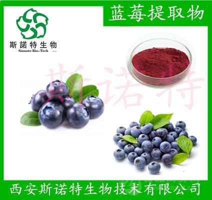 蓝莓提取物 5% 花青素 蓝莓提取原料粉   厂家原料 斯诺特厂家