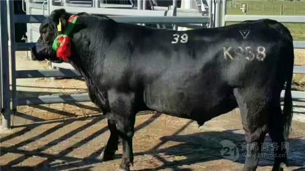养殖什么肉牛赚钱