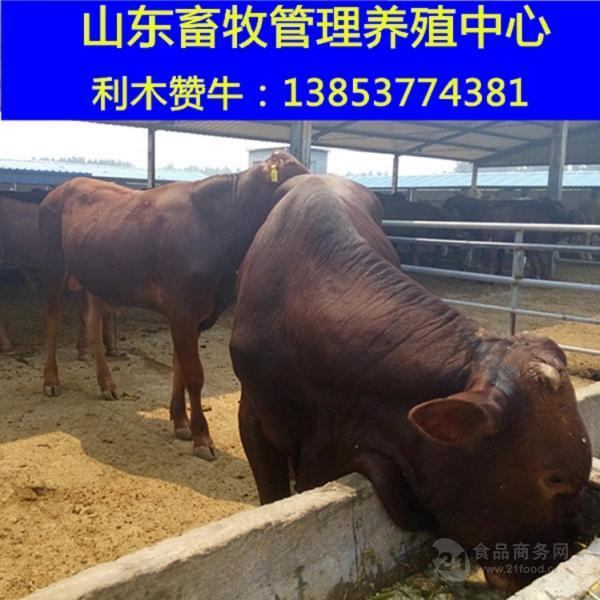 2018养牛的利润