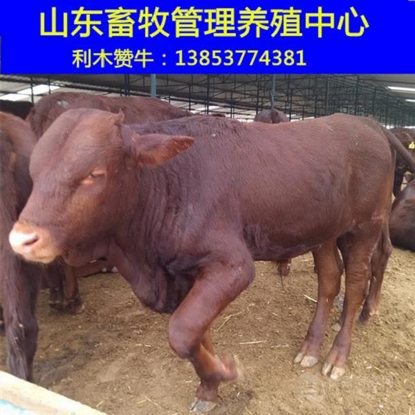 买一头牛多少钱