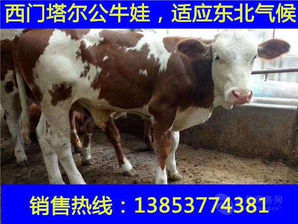 养牛成本及利润分析