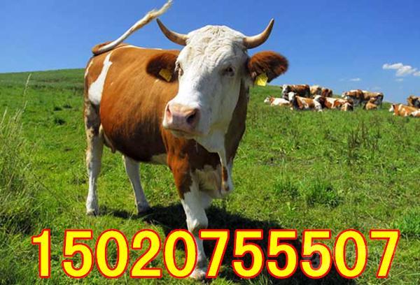 养十头牛与打工那个好