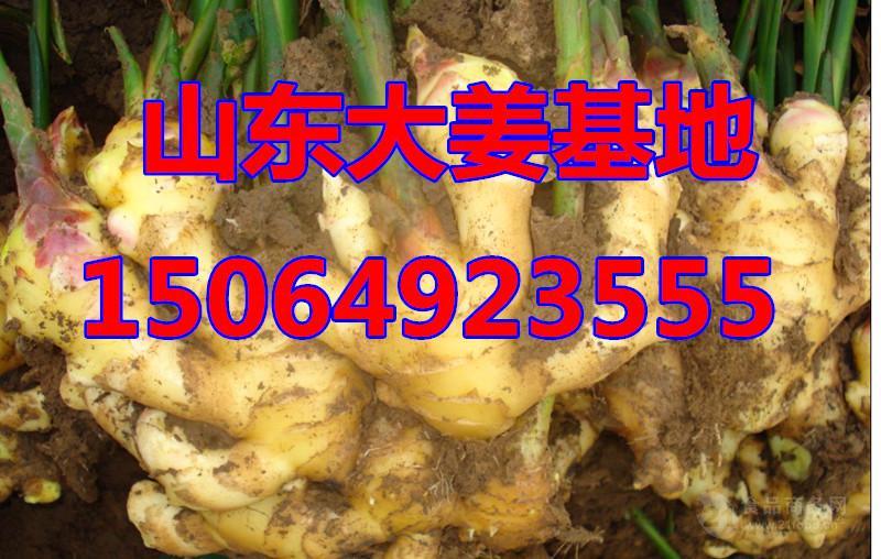 山东生姜价格,大姜多少钱一斤,生姜产地批发价格