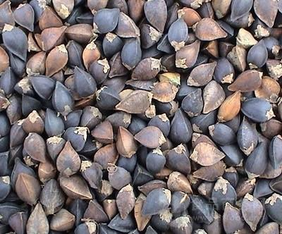 苦荞麦 黑荞麦 脱壳苦荞麦精细粉 荞麦壳 荞麦皮 荞麦仁 浩宇