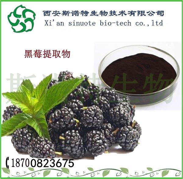 速溶黑莓汁粉  黑莓粉98%   天然果粉    可做固体饮料