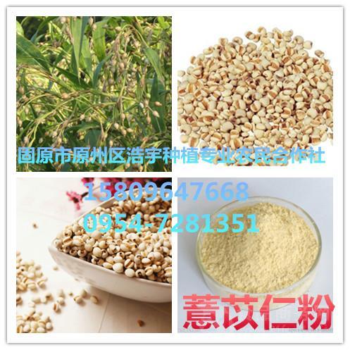 薏苡仁粉薏米速溶粉薏仁提取物粉薏米纯粉
