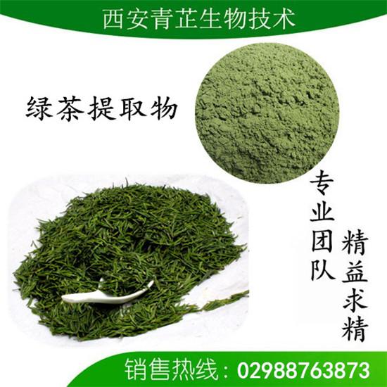绿茶提取物 茶多酚98% 绿茶提取物 苦茗提取物