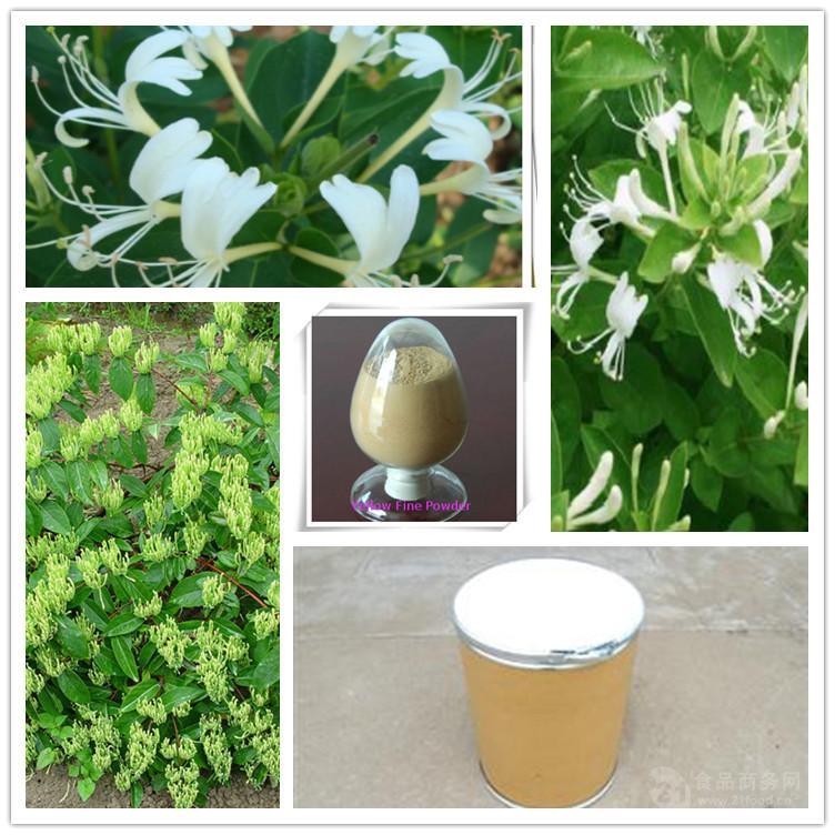 茶藨子菌粉 金银花菌粉 茶藨子叶状层菌发酵菌丝体 茶藨子菌粉