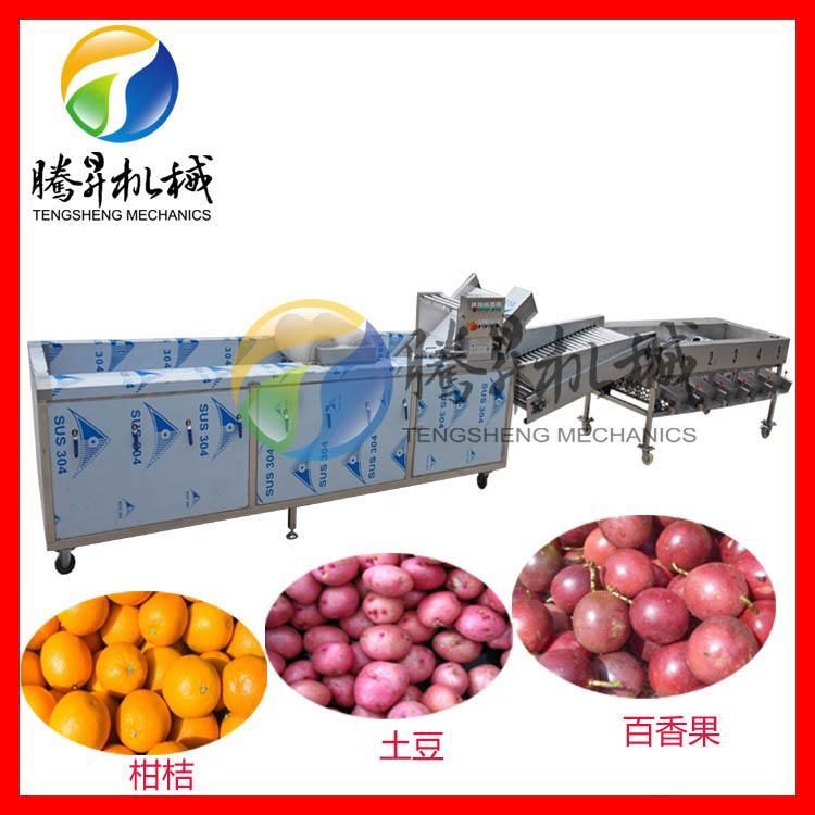 厂家直销土豆分级机 苹果清洗分选机 橙子清洗筛选生产线