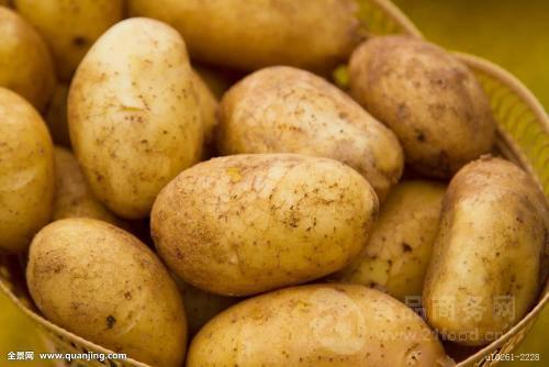 土豆手工制作小动物