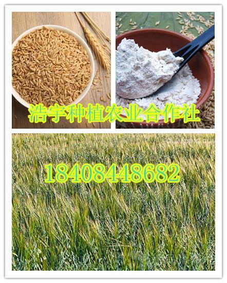 燕麦提取物   熟燕麦粉(莜麦粉)燕麦速溶粉