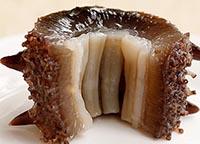 大连即食海参一斤有多少个头 海参辨别