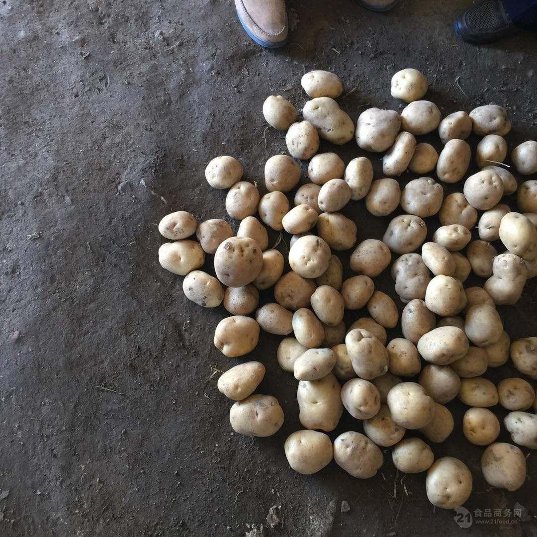 2017马铃薯种子