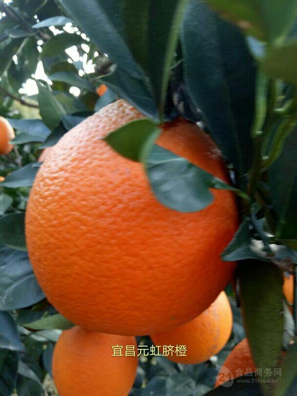 脐橙产地批发