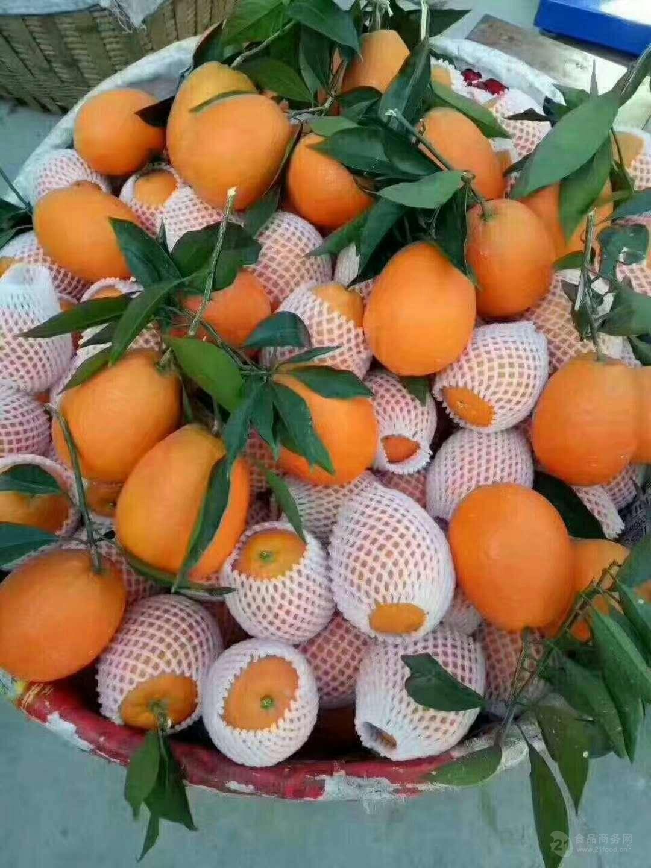 紐荷尔脐橙产地直供