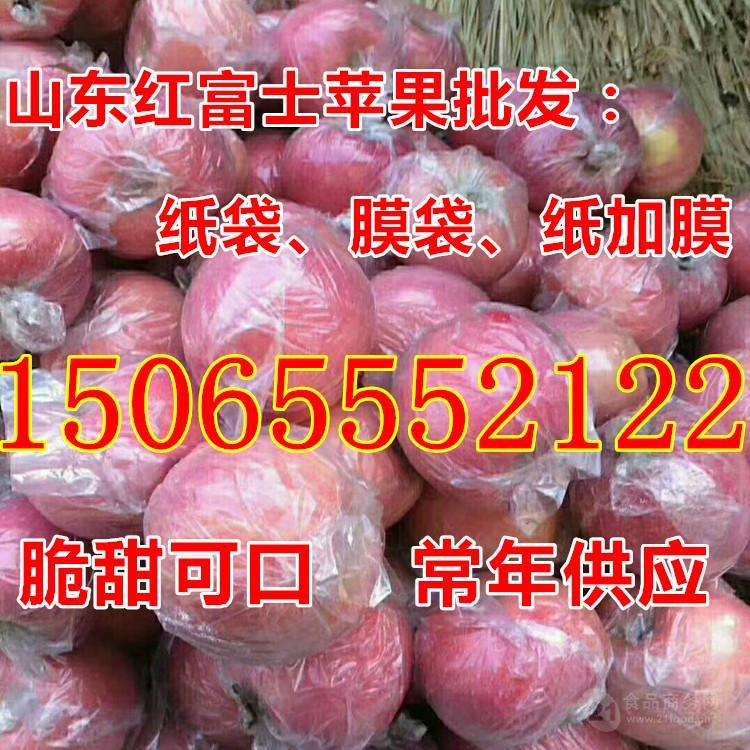 山东美八苹果今日批发价格行情