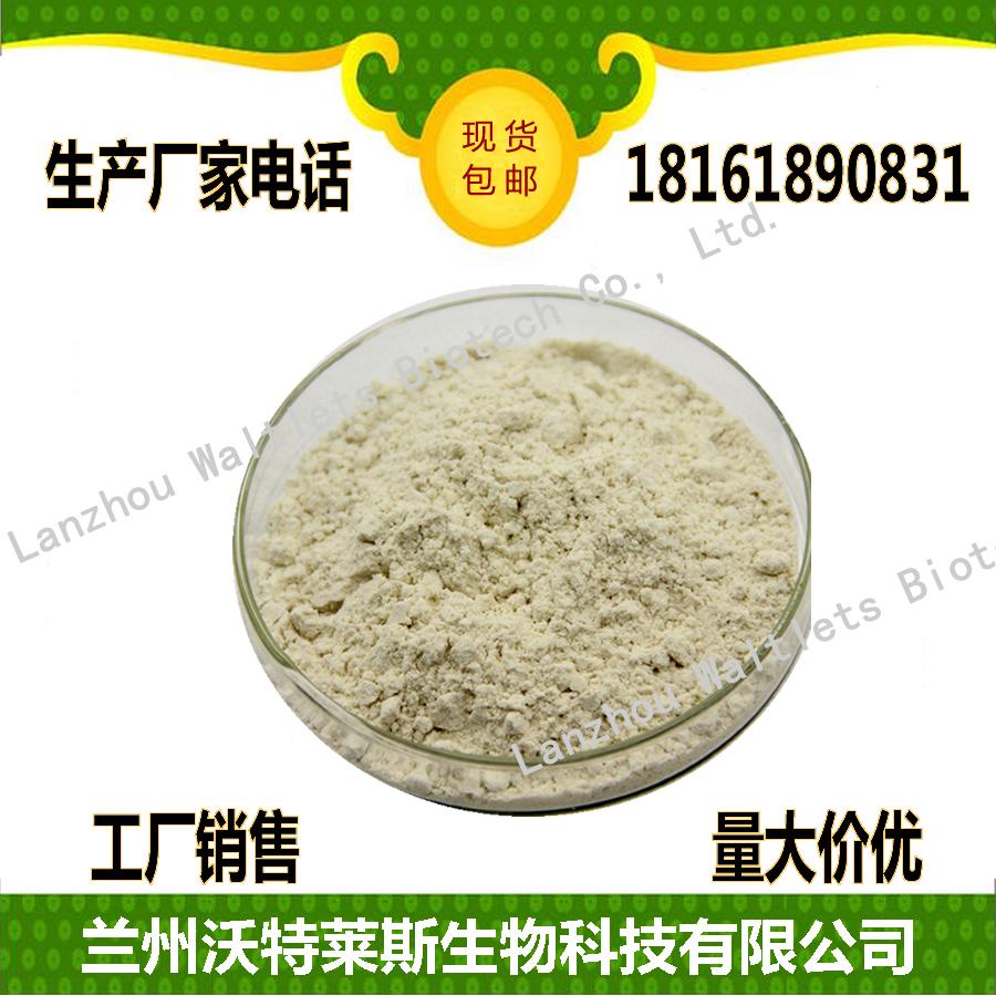 食品原料粉 南瓜籽粉 速溶  现货供应