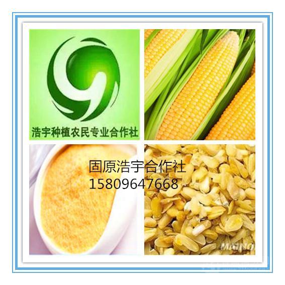 玉米胚芽粉 精细粉末  代餐粉 浩宇合作社 比例10:1 玉米速溶粉