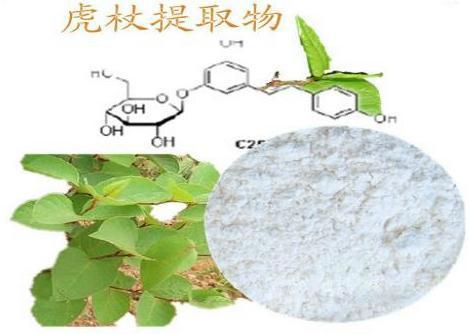 虎杖提取物 白藜蘆醇98% 美白 現貨供應 天然白藜蘆醇98%