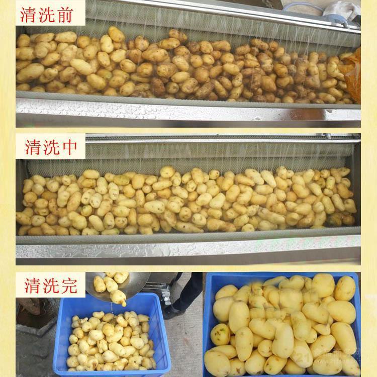 蔬菜清洗机厂家/土豆毛辊喷淋清洗机