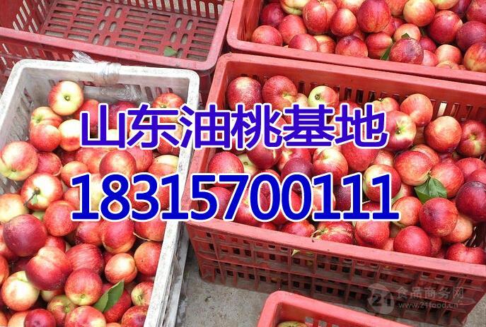 今日油桃批发价格 大棚油桃价格介绍详细