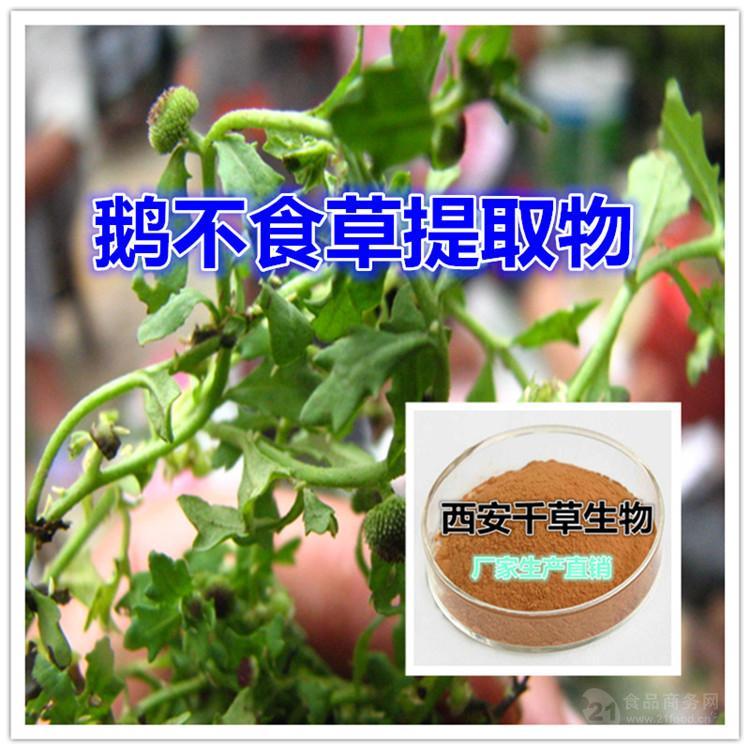 鹅不食草浓缩粉 厂家专业生产纯天然动植物提取物粉