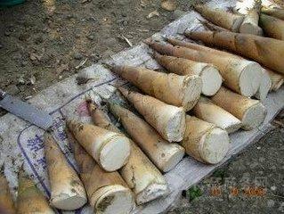 智能竹笋烘干设备