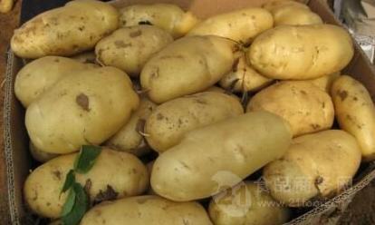 大棚土豆批发价格山东土豆最新价格