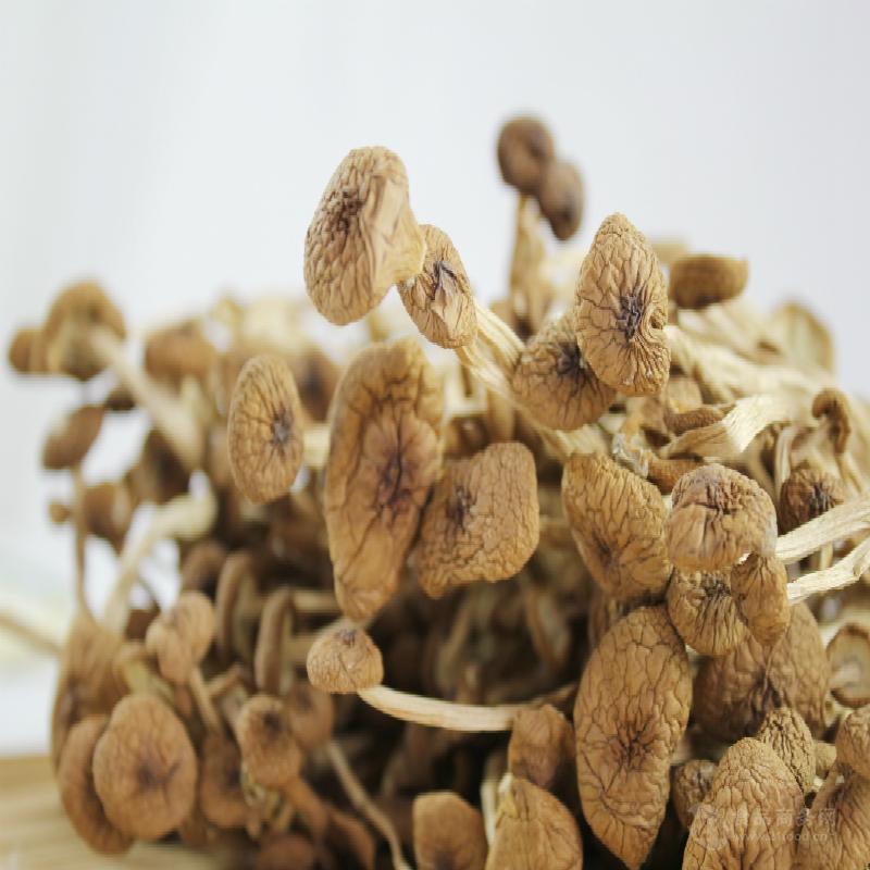 茶树菇批发 产地直销