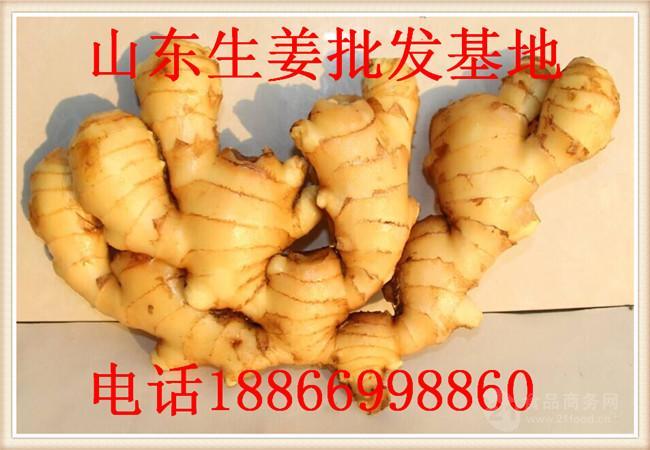 优质小黄姜价格 今日山东小黄姜批发价格