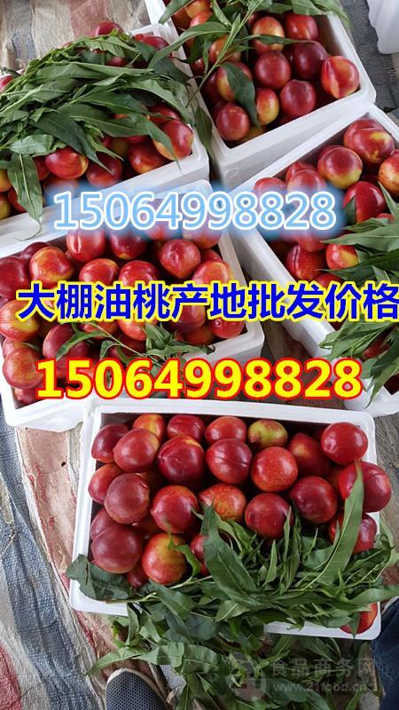 山东大棚油桃价格今年大棚油桃产地什么价格