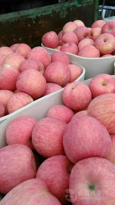 冷库红富士苹果批发价格 今年红富士苹果市场行情