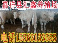 strong/p怎样喂养肉牛长的更快/strong