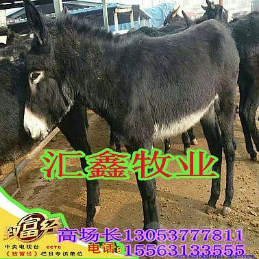 200斤小牛多少钱一头育肥牛