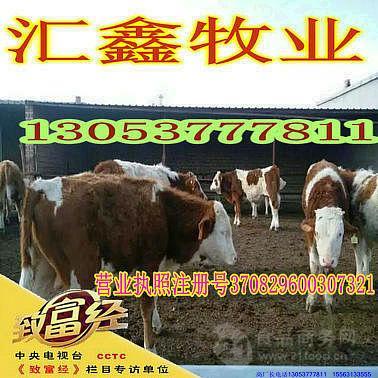 一头牛能赚多少钱牛犊子
