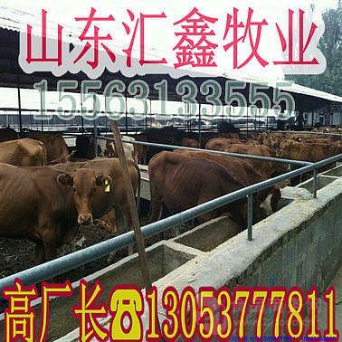 一只小黄牛多少钱架子牛