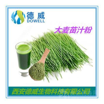 大麦苗汁粉 Barley grass Juice Powder  大麦苗汁粉厂家