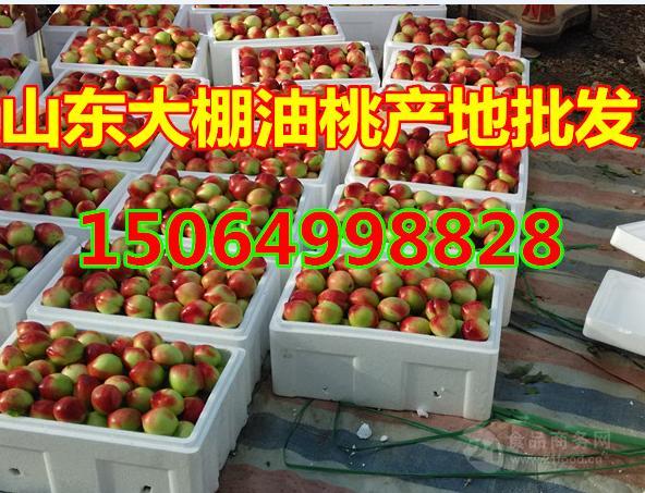 126大棚油桃产地在哪里今日油桃价格多少钱一斤