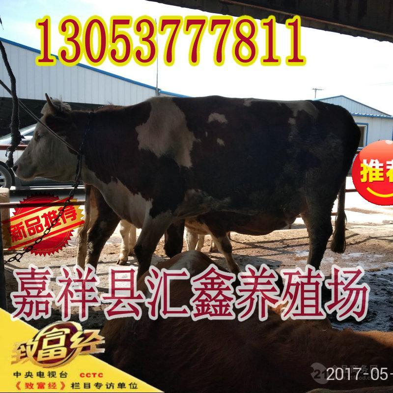 黄牛苗价格_什么地方有卖小肉牛犊的