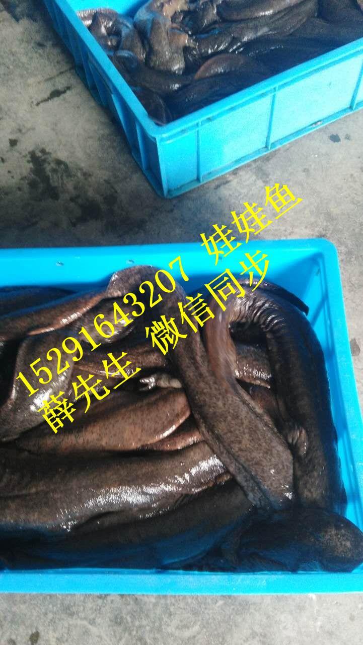 5-8斤娃娃鱼多少钱一斤