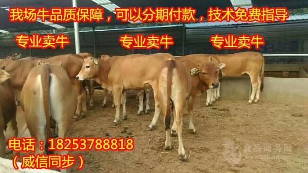 2012钦州人口_——记高速发展中的中国—马来西亚钦州产业园区