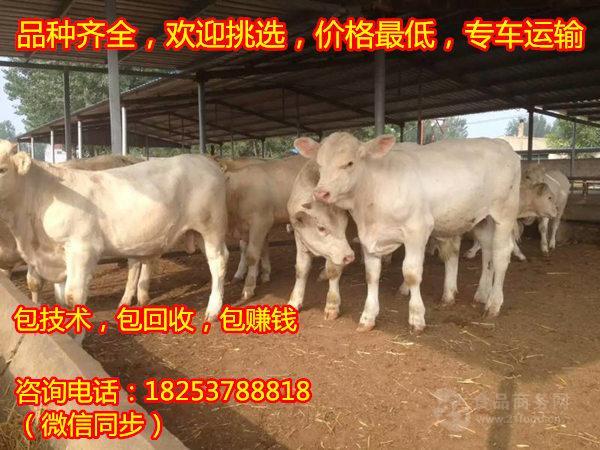 养20头牛多少成本