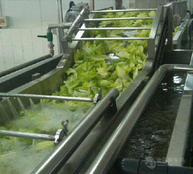 生产杨梅清洗机,蓝莓清洗机,梅子清洗机报价