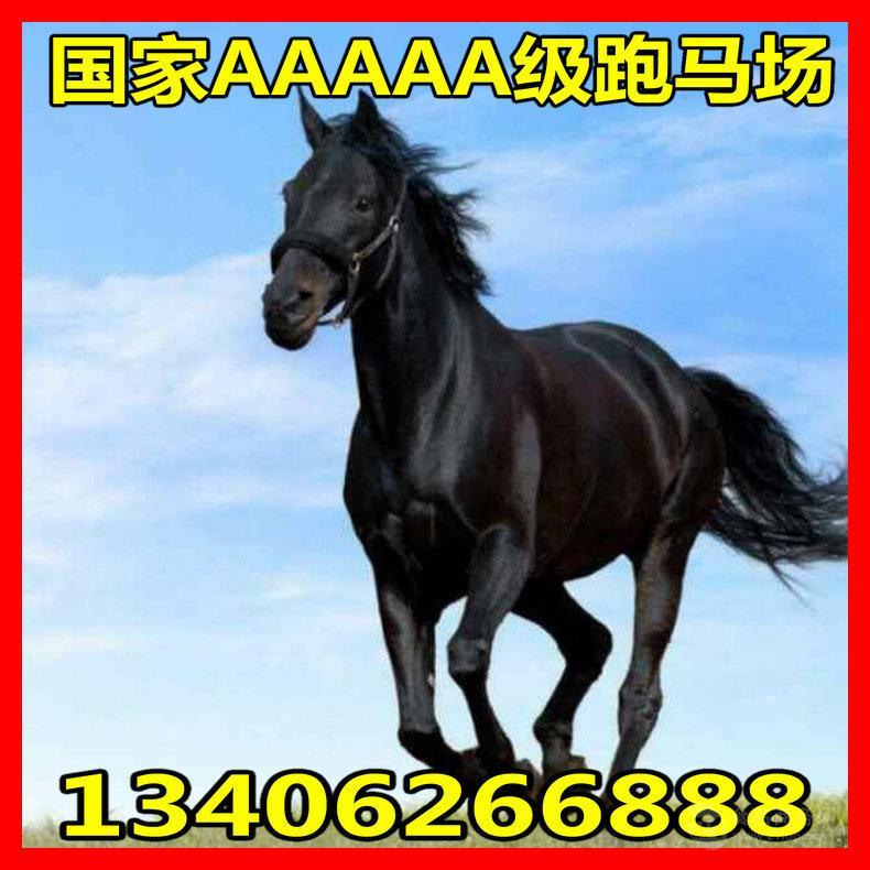 蒙古马与汗血宝马对比