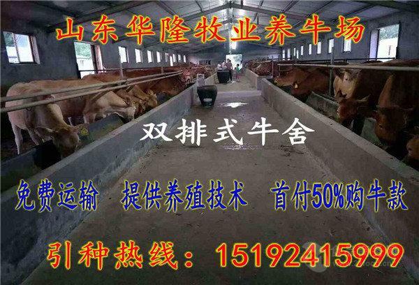 延寿肉牛犊价格