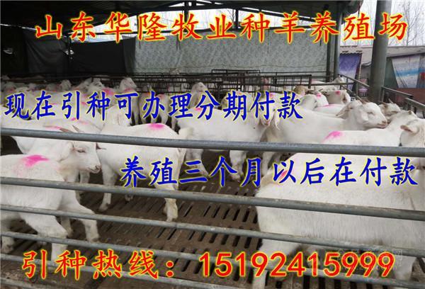 波尔山羊多少钱一只
