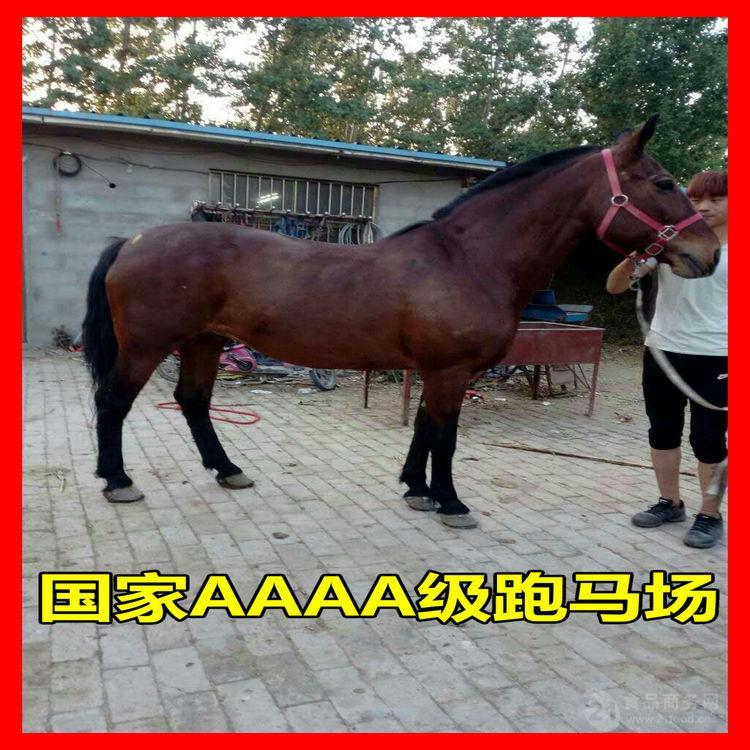 马驹多少钱一头