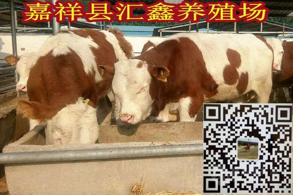 夏洛莱牛多少钱一头牛犊子